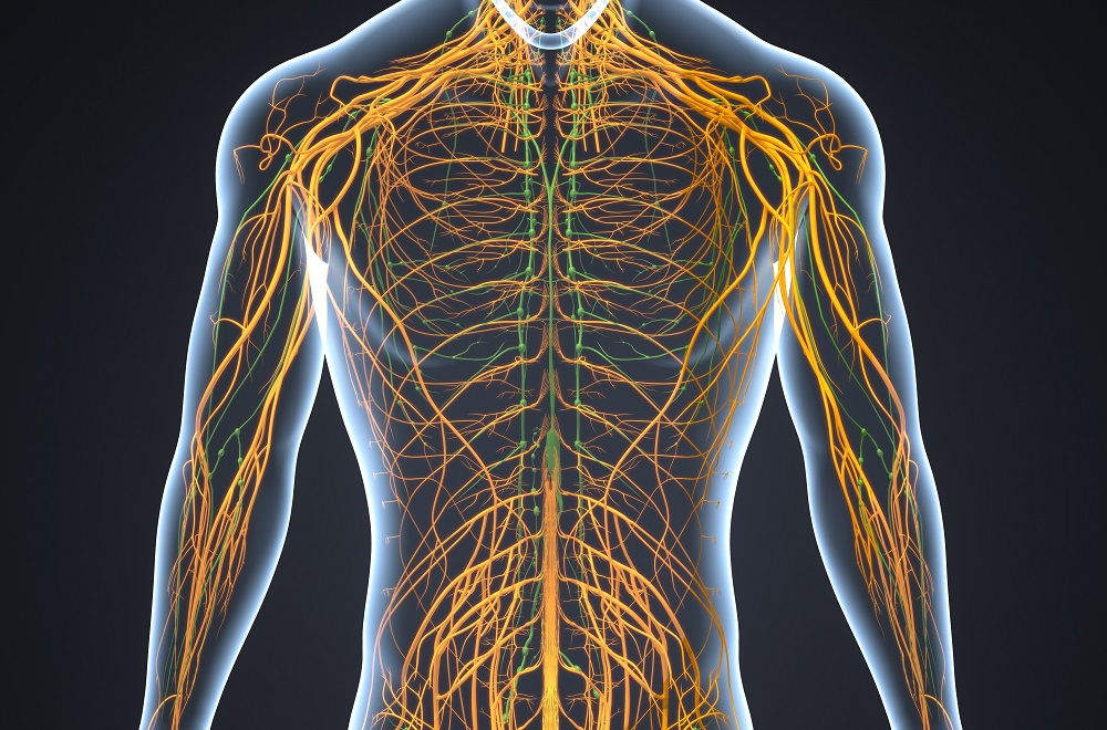 neurodynamics-neuron system in human body